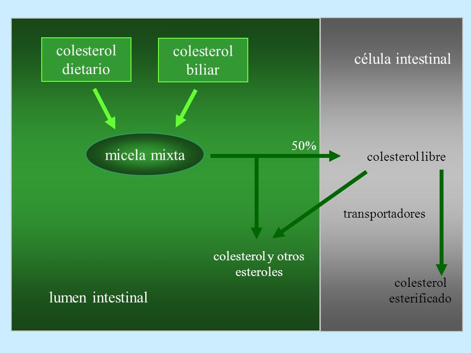 colesterol dietario colesterol biliar célula intestinal micela mixta
