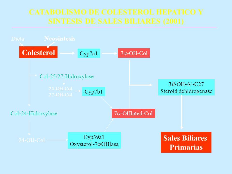 CATABOLISMO DE COLESTEROL HEPATICO Y SINTESIS DE SALES BILIARES (2001)