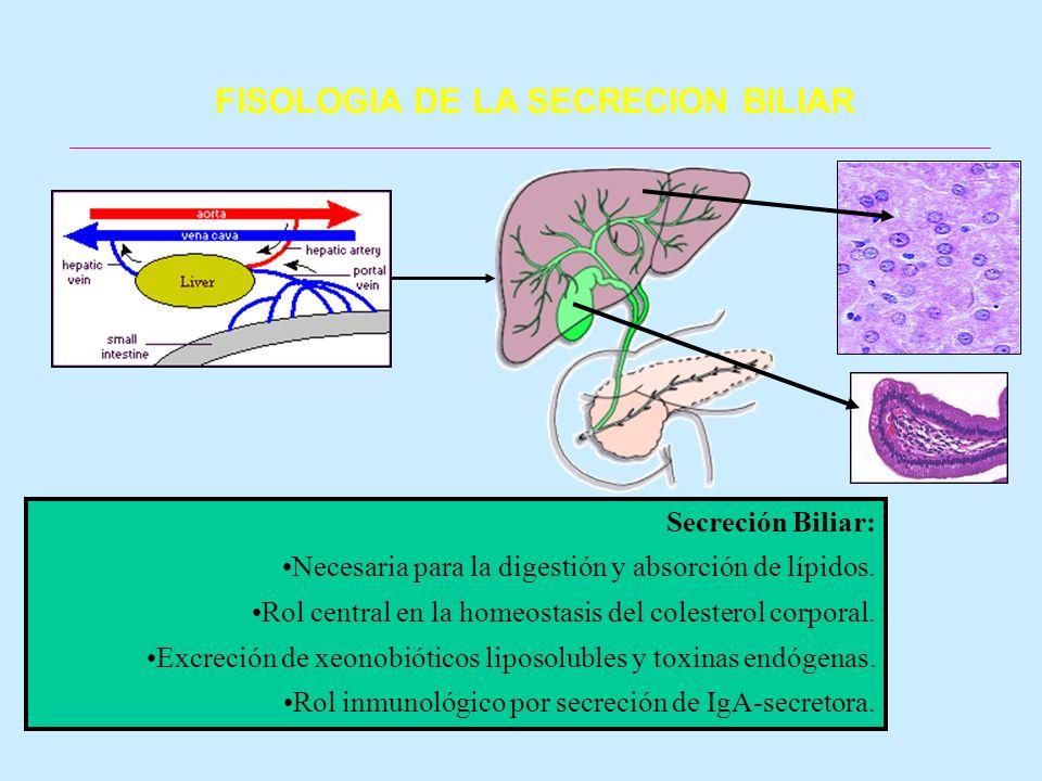 FISOLOGIA DE LA SECRECION BILIAR