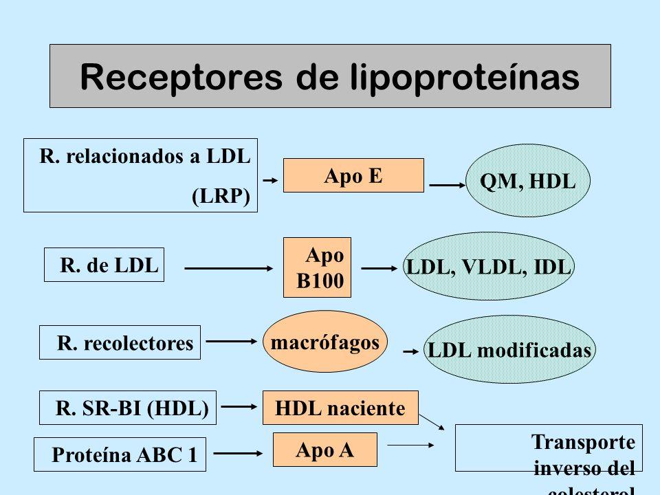 Receptores de lipoproteínas