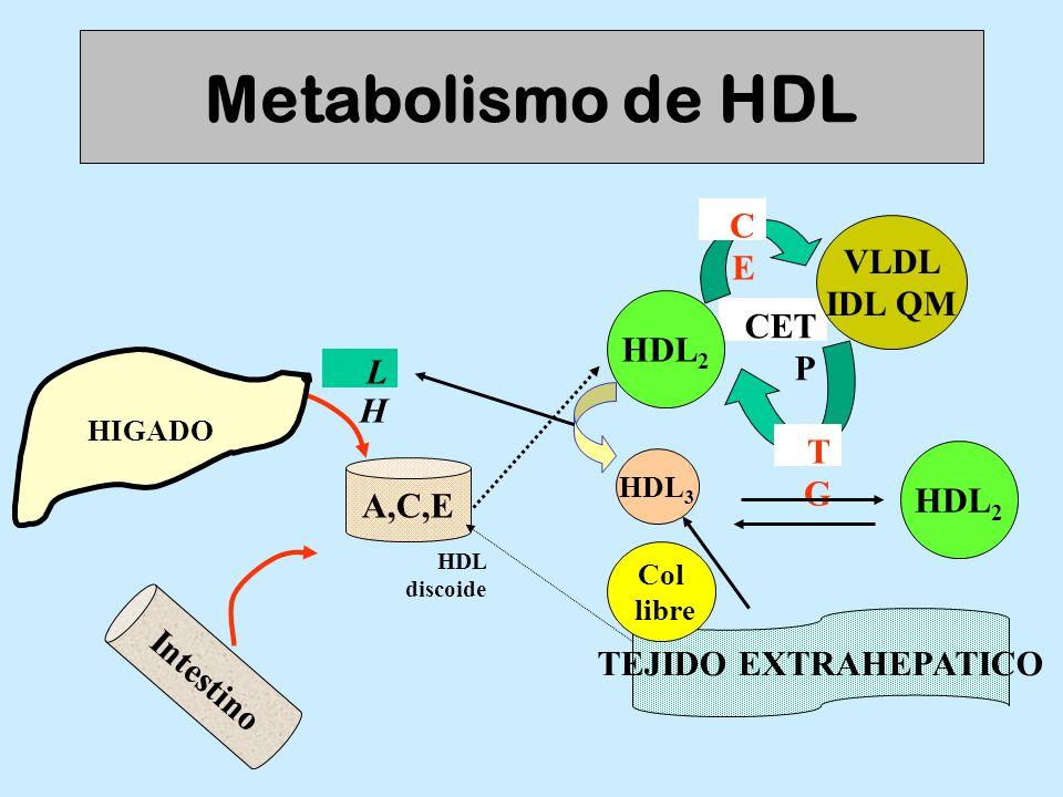 Metabolismo de HDL CE VLDL IDL QM CETP HDL2 L H TG HDL2 A,C,E
