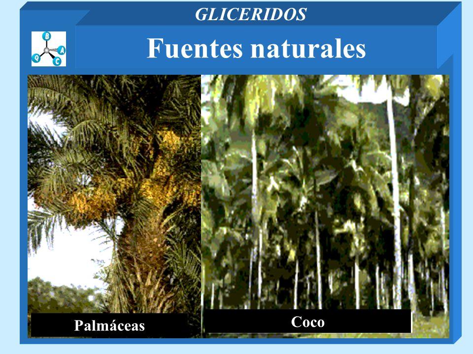 GLICERIDOS Fuentes naturales Palmáceas Coco