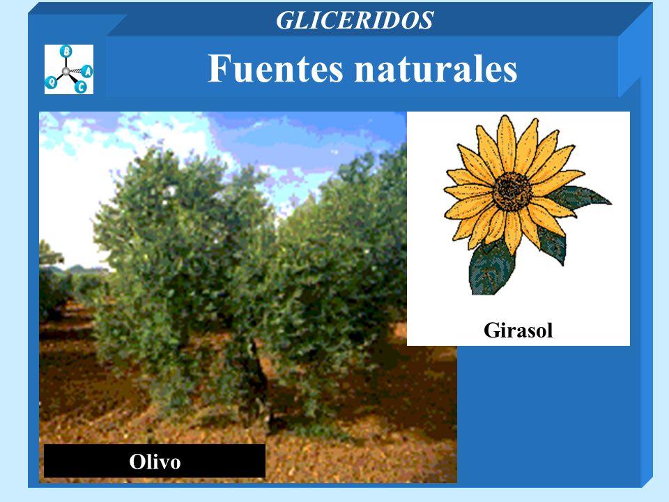 GLICERIDOS Fuentes naturales Olivo Girasol