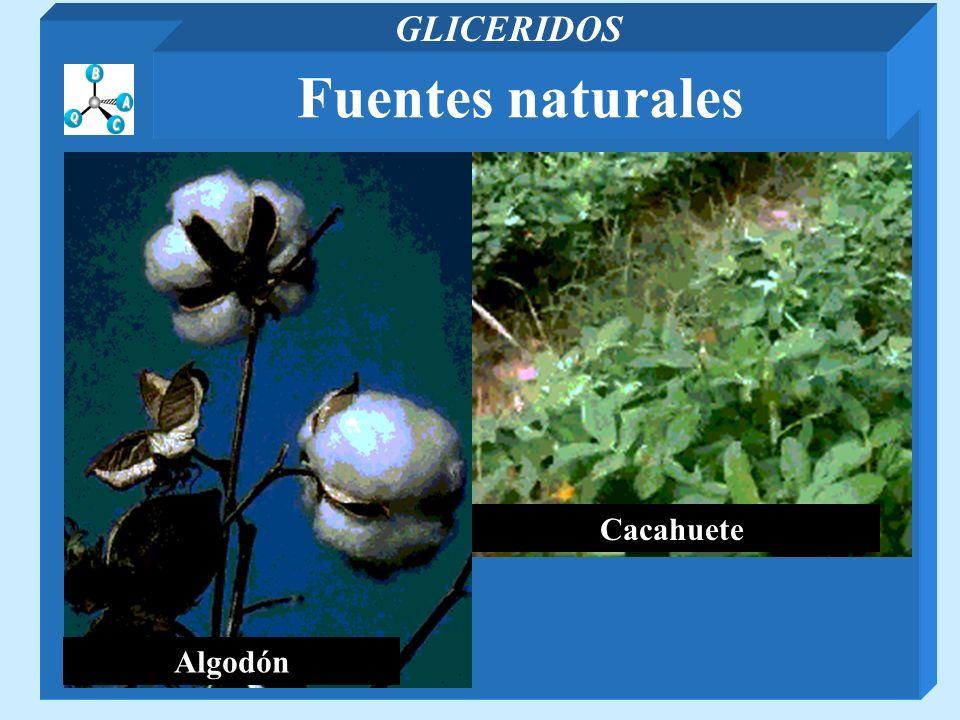 GLICERIDOS Fuentes naturales Algodón Cacahuete