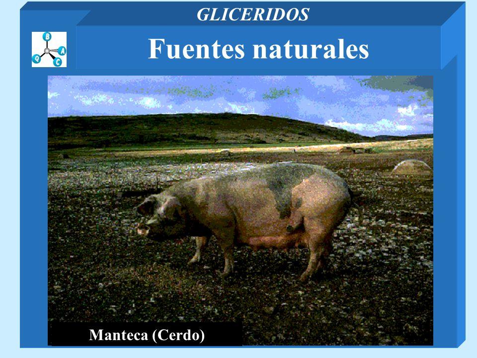 GLICERIDOS Fuentes naturales Manteca (Cerdo)