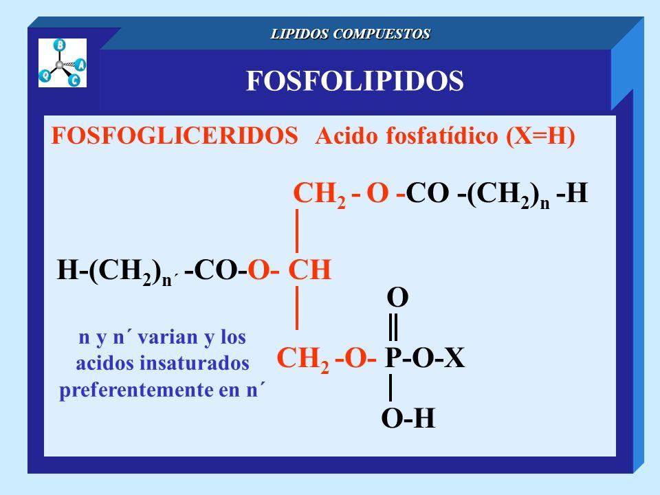 n y n´ varian y los acidos insaturados preferentemente en n´