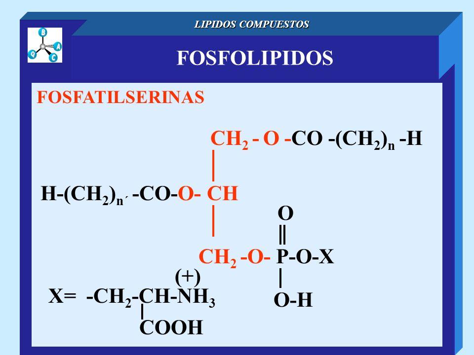 FOSFOLIPIDOS CH2 - O -CO -(CH2)n -H H-(CH2)n´ -CO-O- CH O