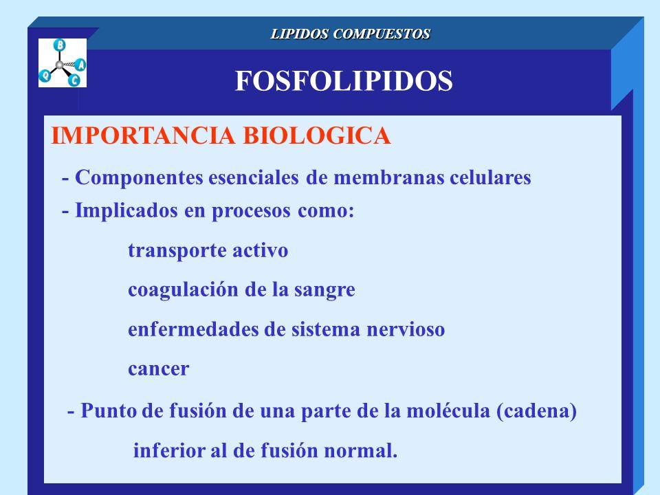 FOSFOLIPIDOS IMPORTANCIA BIOLOGICA