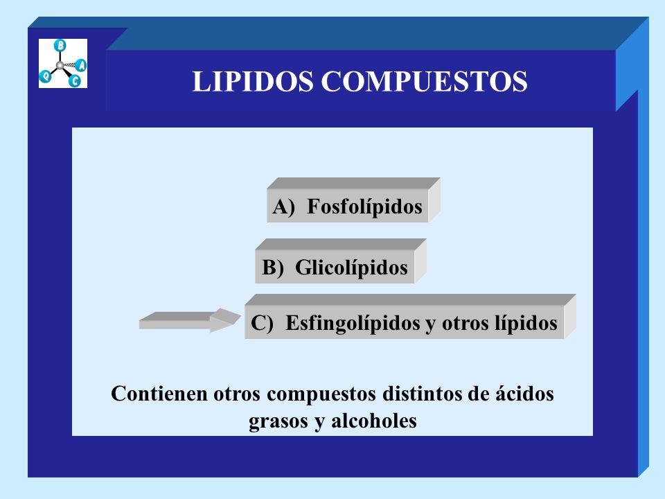 LIPIDOS COMPUESTOS A) Fosfolípidos