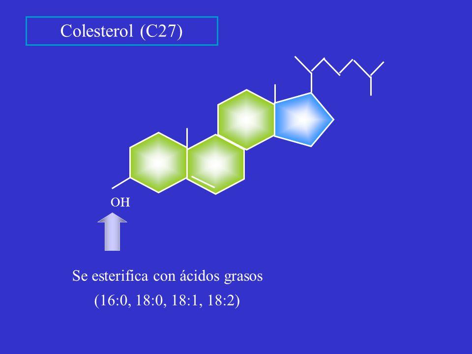Se esterifica con ácidos grasos (16:0, 18:0, 18:1, 18:2)