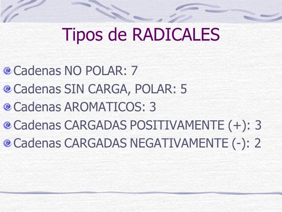 Tipos de RADICALES Cadenas NO POLAR: 7 Cadenas SIN CARGA, POLAR: 5