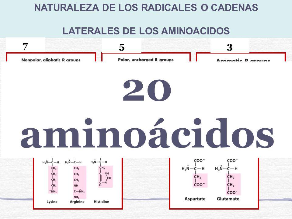 NATURALEZA DE LOS RADICALES O CADENAS LATERALES DE LOS AMINOACIDOS