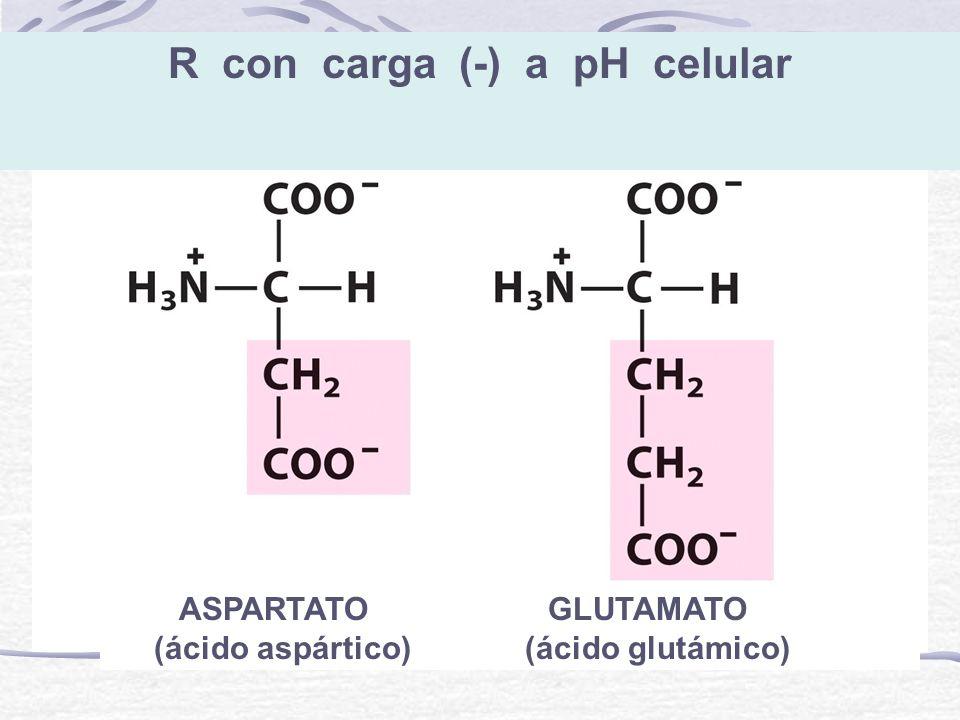 R con carga (-) a pH celular