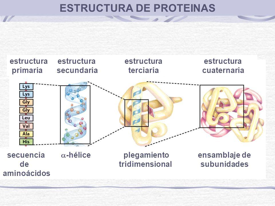 ESTRUCTURA DE PROTEINAS