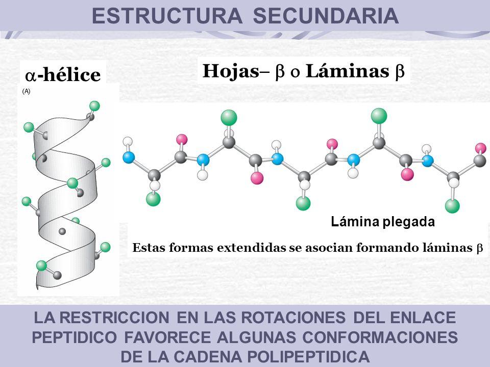 ESTRUCTURA SECUNDARIA DE LA CADENA POLIPEPTIDICA