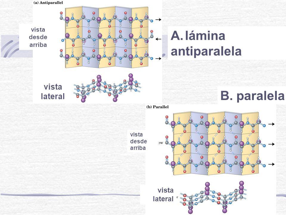 lámina antiparalela B. paralela vista lateral vista lateral vista