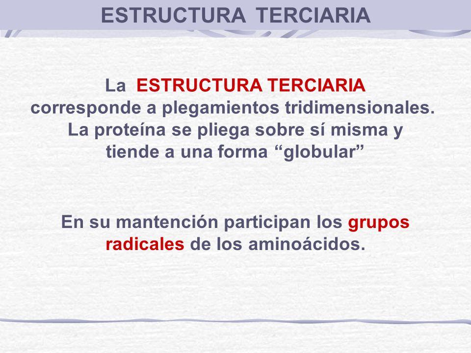 ESTRUCTURA TERCIARIA La ESTRUCTURA TERCIARIA
