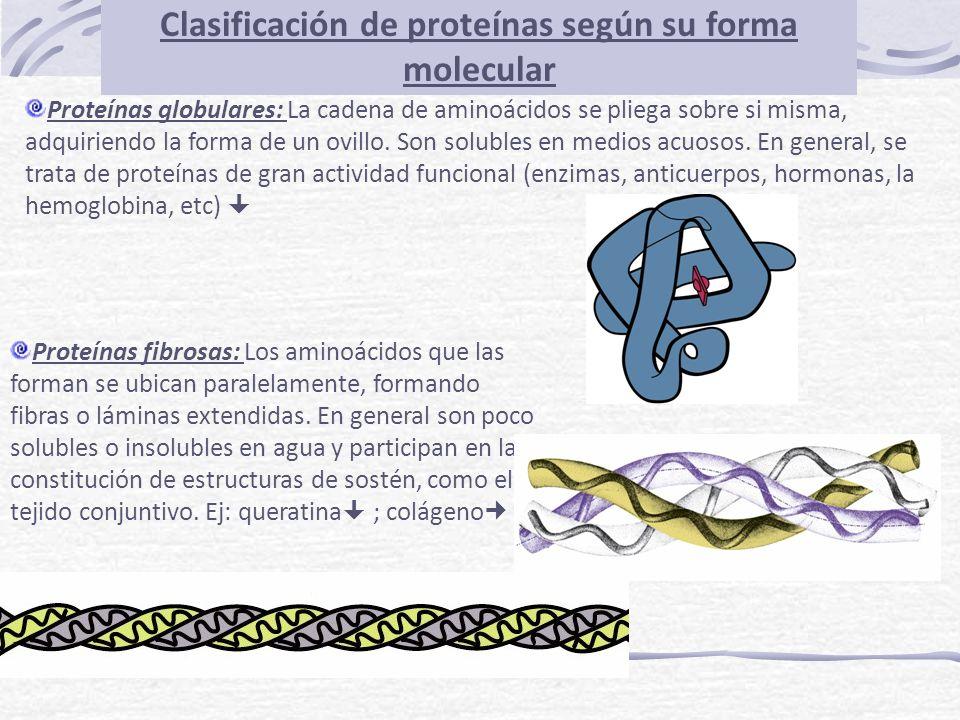 Clasificación de proteínas según su forma molecular