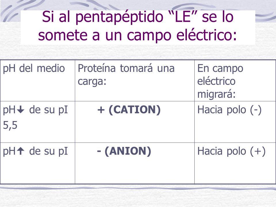 Si al pentapéptido LE se lo somete a un campo eléctrico: