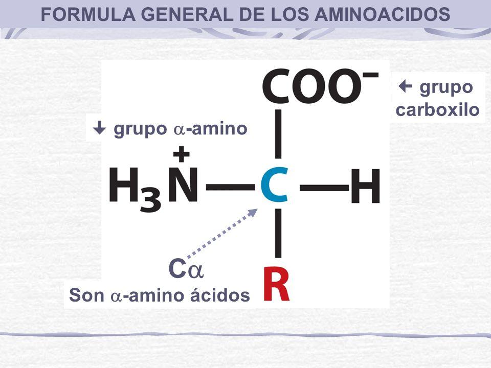 FORMULA GENERAL DE LOS AMINOACIDOS