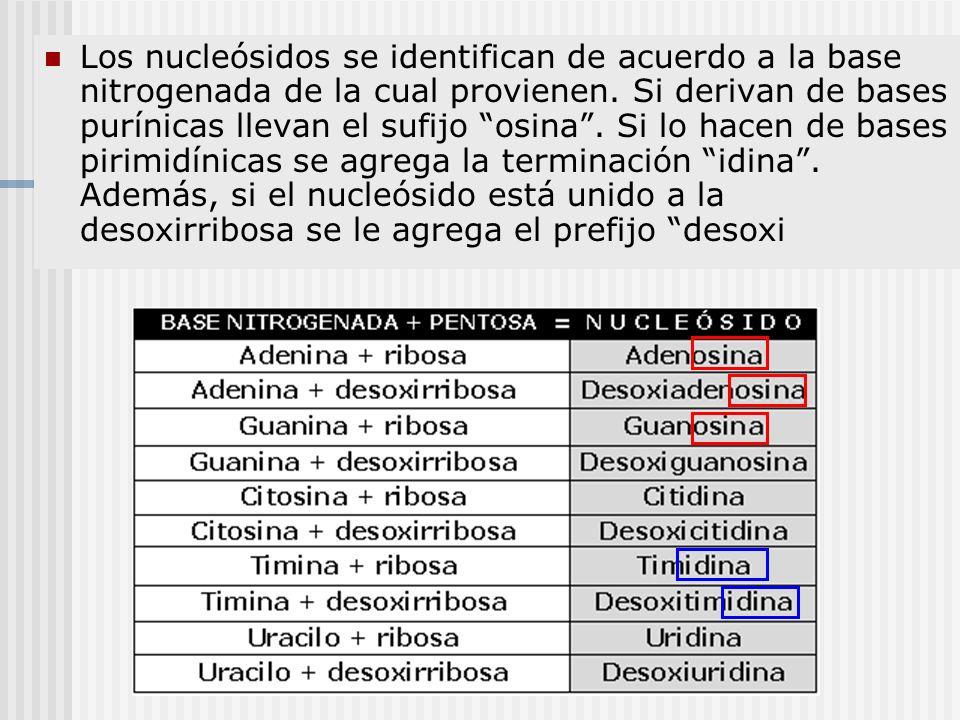 Los nucleósidos se identifican de acuerdo a la base nitrogenada de la cual provienen.