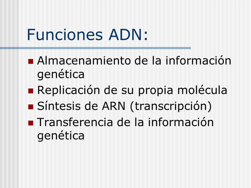 Funciones ADN: Almacenamiento de la información genética