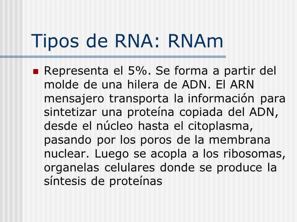 Tipos de RNA: RNAm