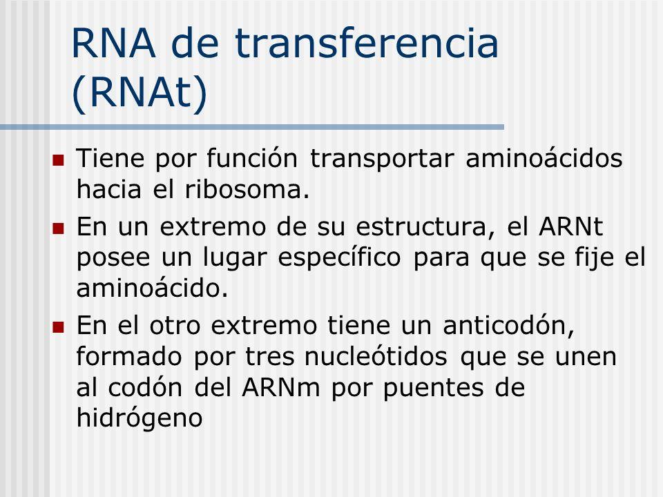 RNA de transferencia (RNAt)
