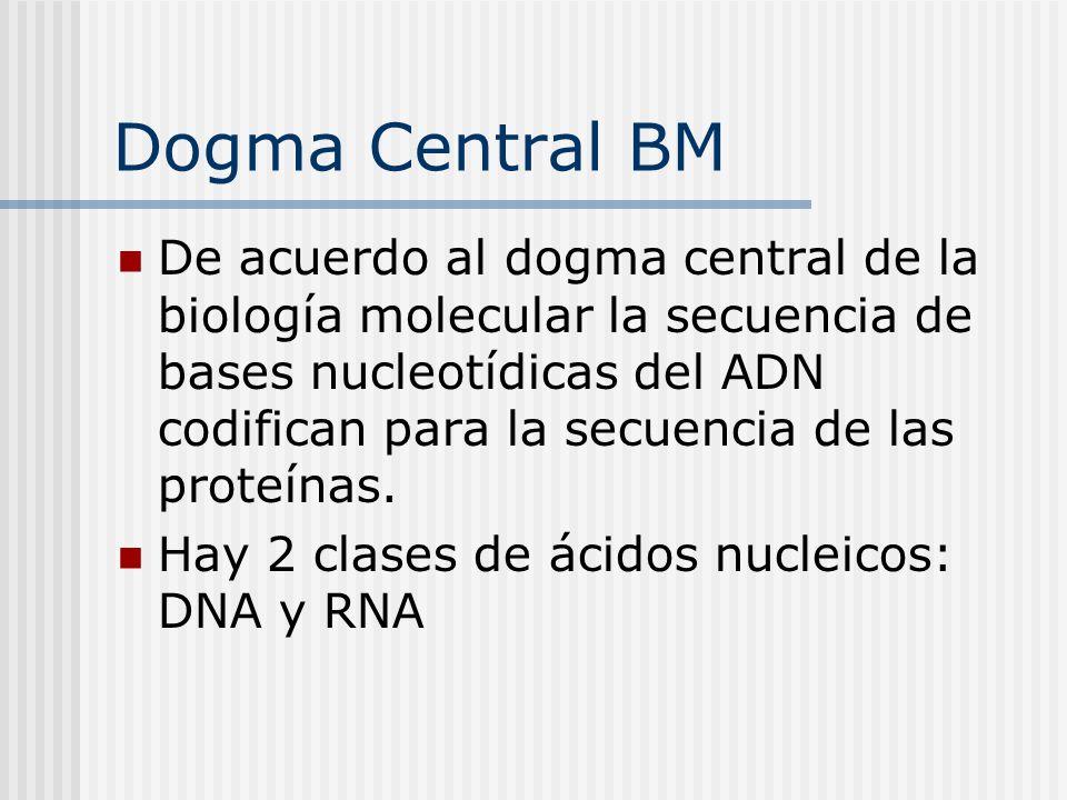 Dogma Central BM
