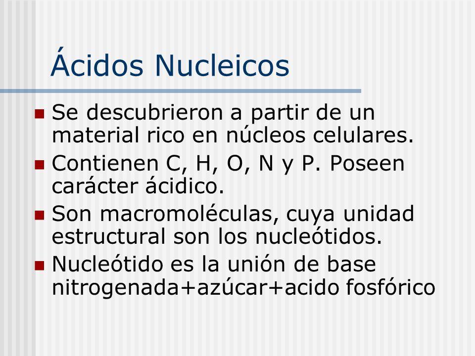 Ácidos Nucleicos Se descubrieron a partir de un material rico en núcleos celulares. Contienen C, H, O, N y P. Poseen carácter ácidico.