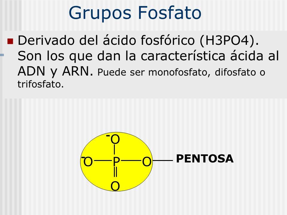 Grupos Fosfato