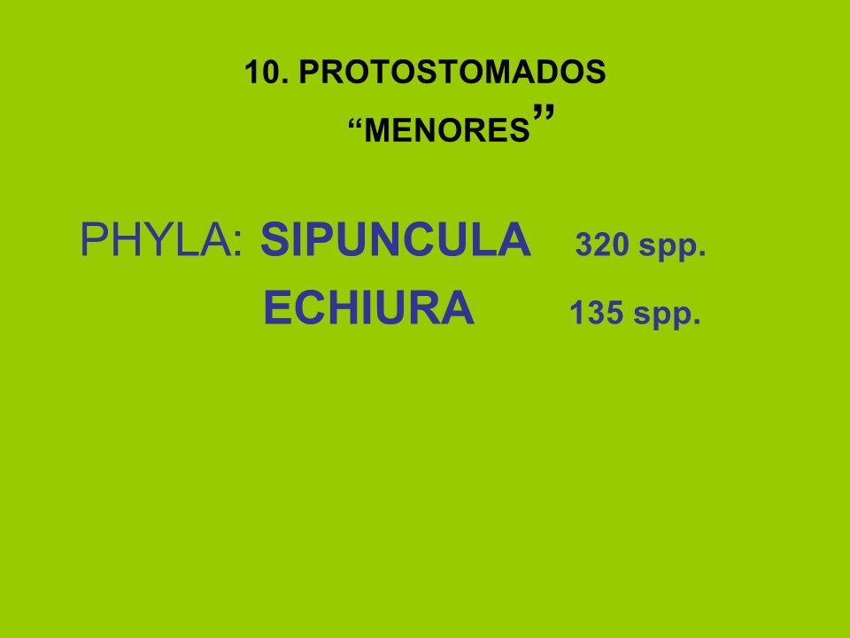 10. PROTOSTOMADOS MENORES