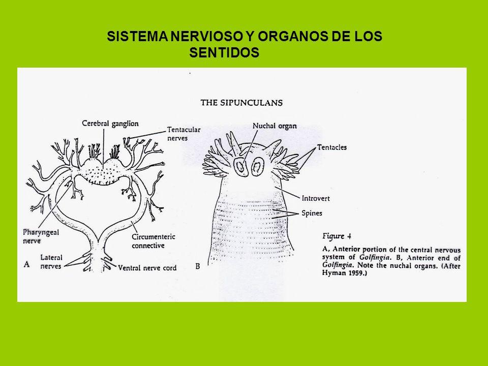 SISTEMA NERVIOSO Y ORGANOS DE LOS