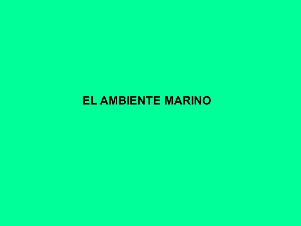 EL AMBIENTE MARINO