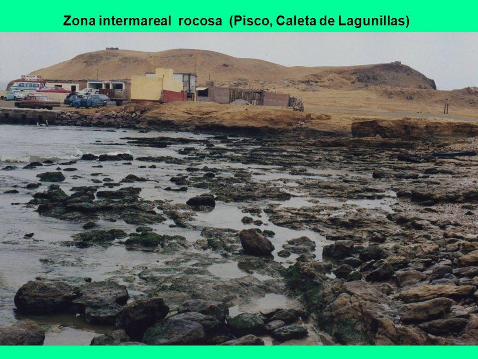 Zona intermareal rocosa (Pisco, Caleta de Lagunillas)