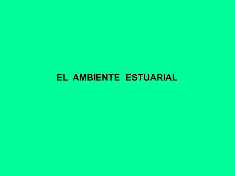 EL AMBIENTE ESTUARIAL