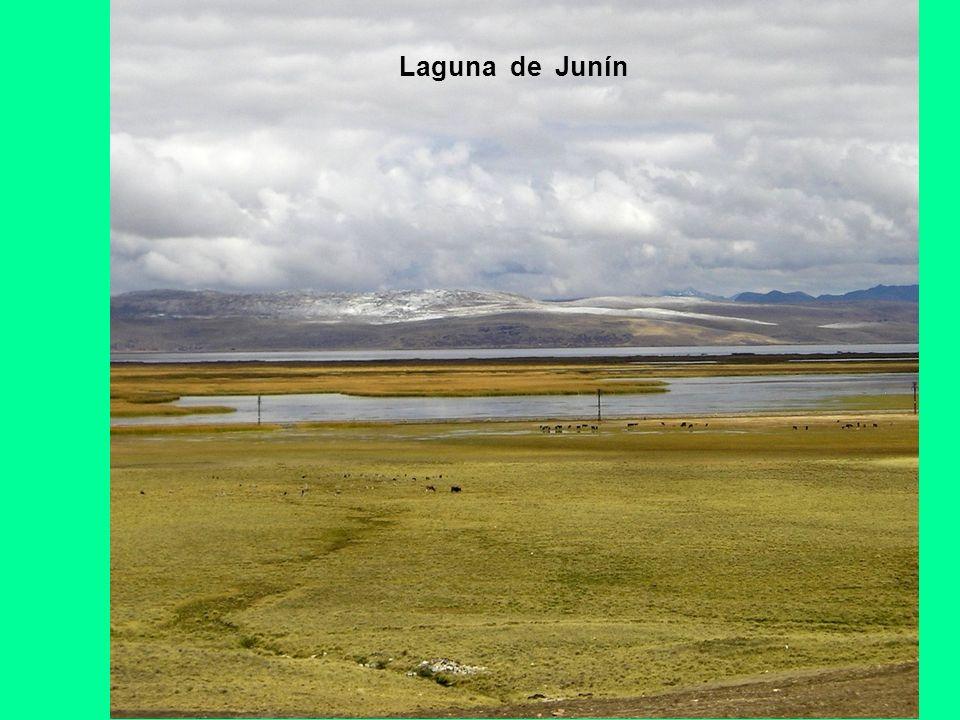 Laguna de Junín