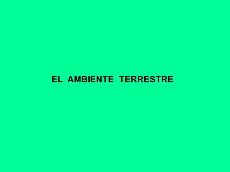 EL AMBIENTE TERRESTRE