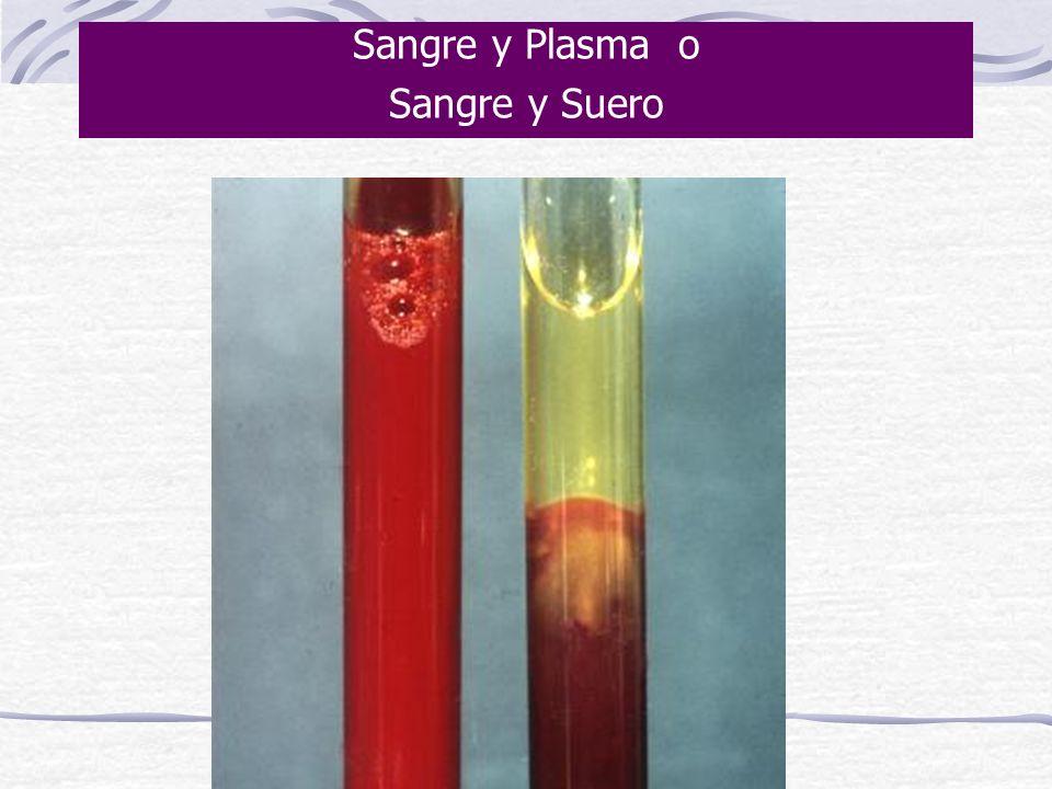 Sangre y Plasma o Sangre y Suero
