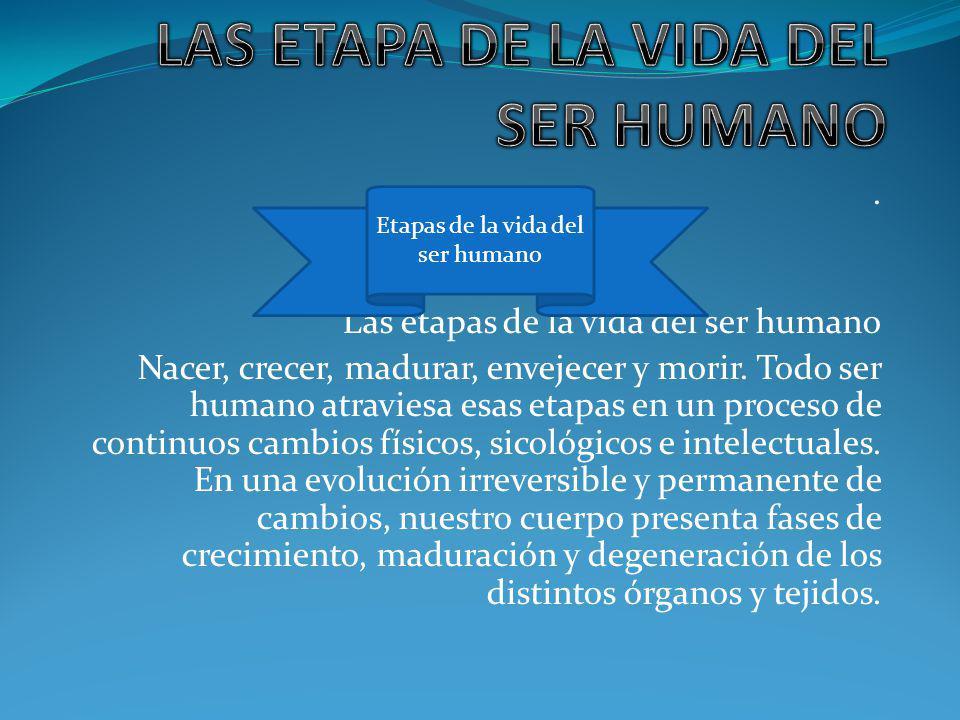 LAS ETAPA DE LA VIDA DEL SER HUMANO