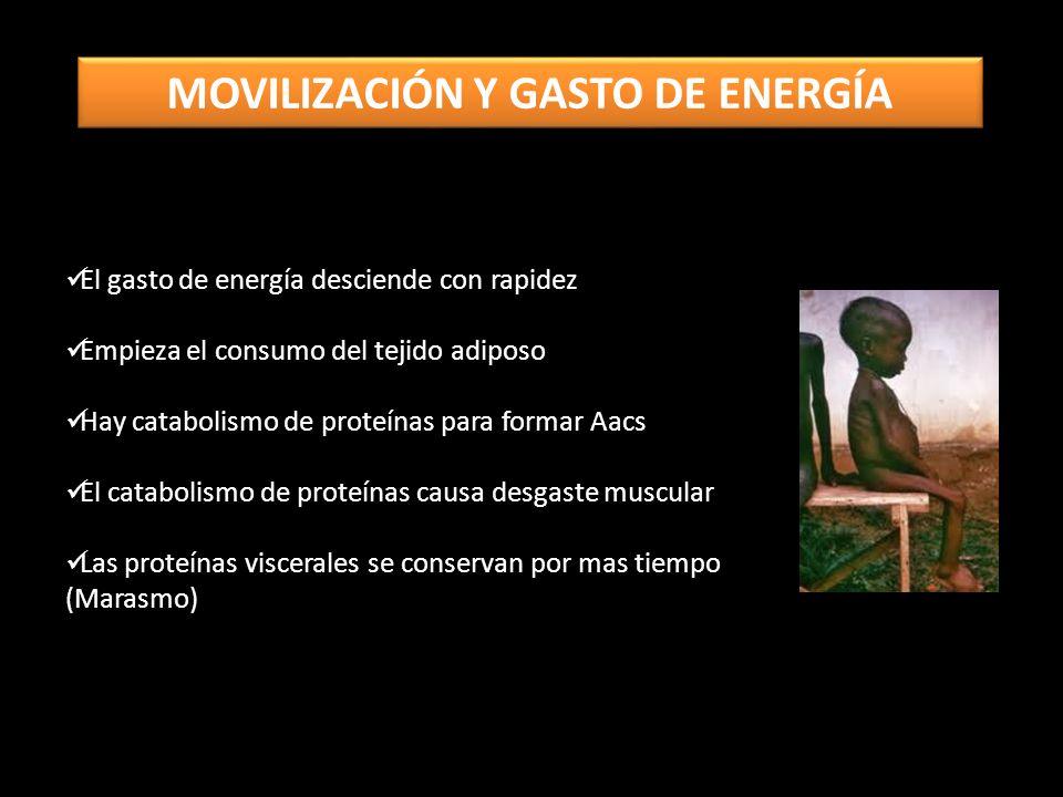 MOVILIZACIÓN Y GASTO DE ENERGÍA