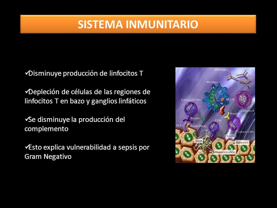 SISTEMA INMUNITARIO Disminuye producción de linfocitos T