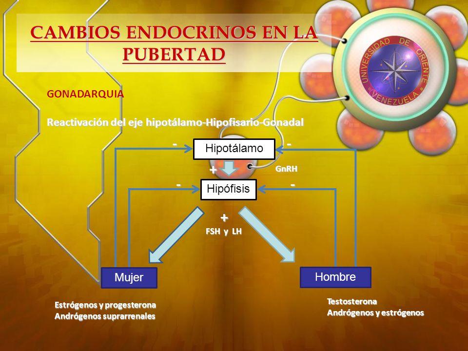 CAMBIOS ENDOCRINOS EN LA PUBERTAD