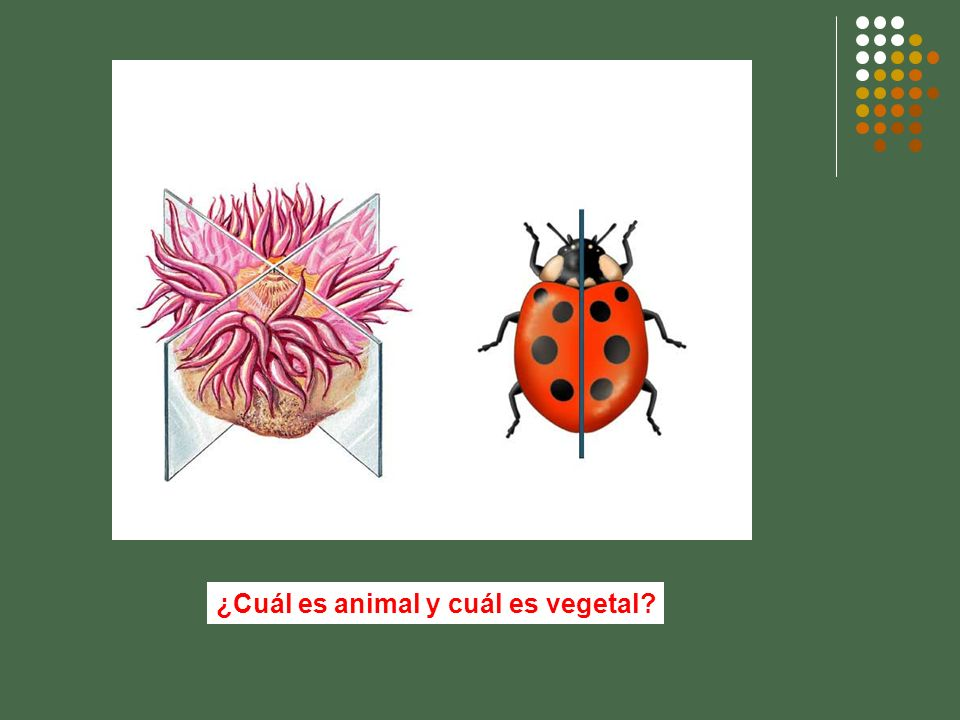 ¿Cuál es animal y cuál es vegetal