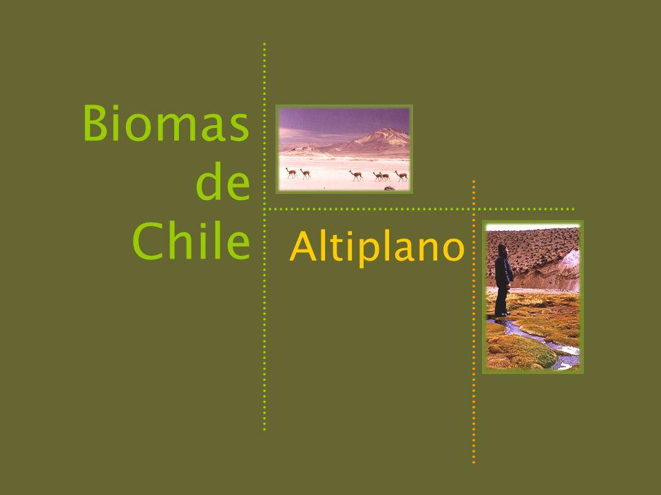 Biomas de Chile Altiplano