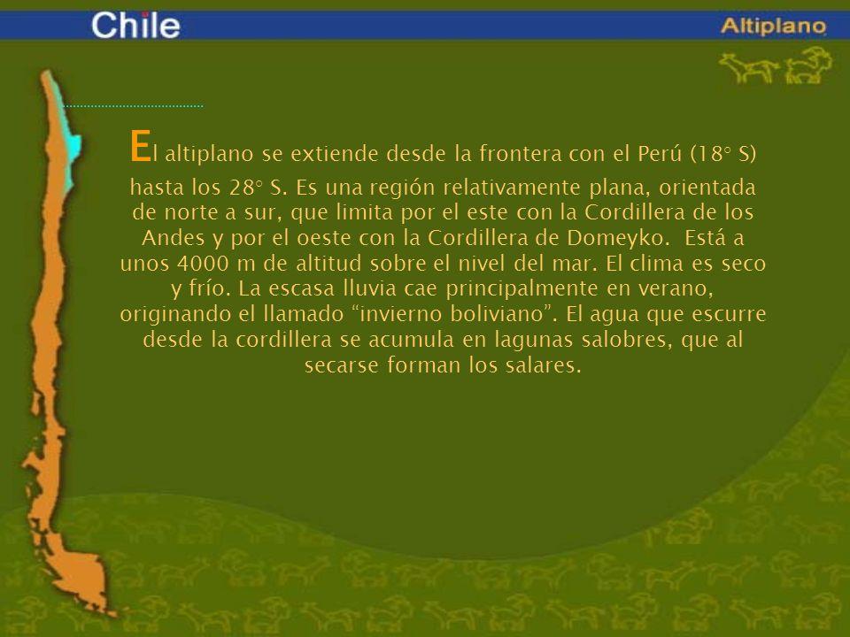 El altiplano se extiende desde la frontera con el Perú (18° S) hasta los 28° S.
