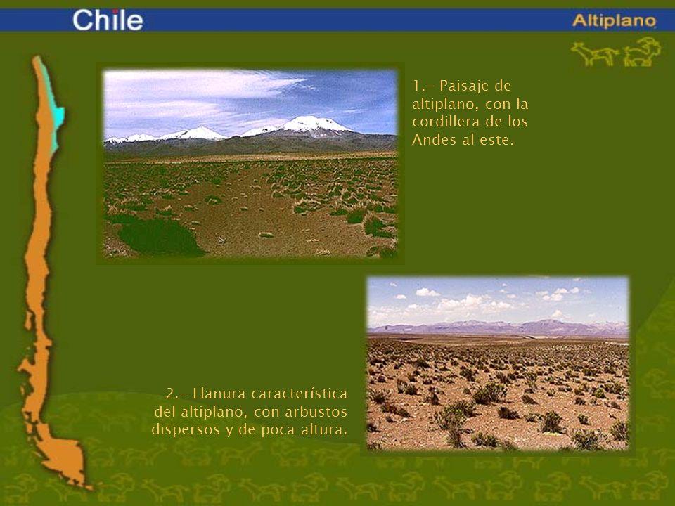 1.- Paisaje de altiplano, con la cordillera de los Andes al este.