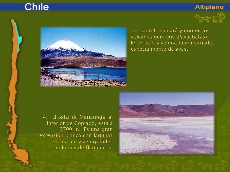 3. - Lago Chungará y uno de los volcanes gemelos (Payachatas)