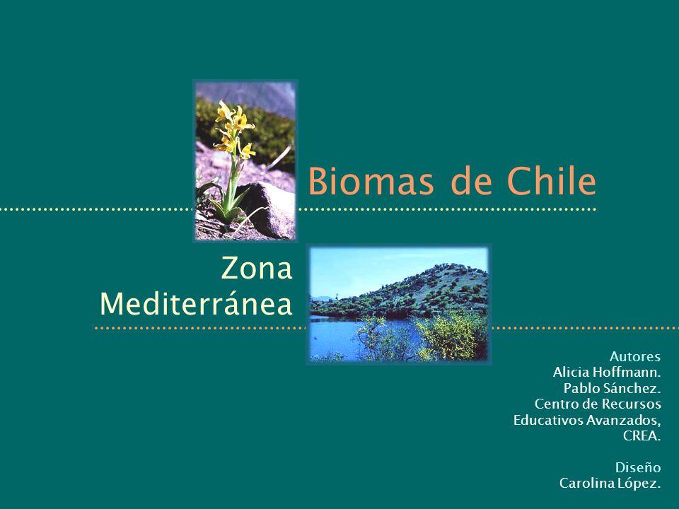Biomas de Chile Zona Mediterránea Autores Alicia Hoffmann.