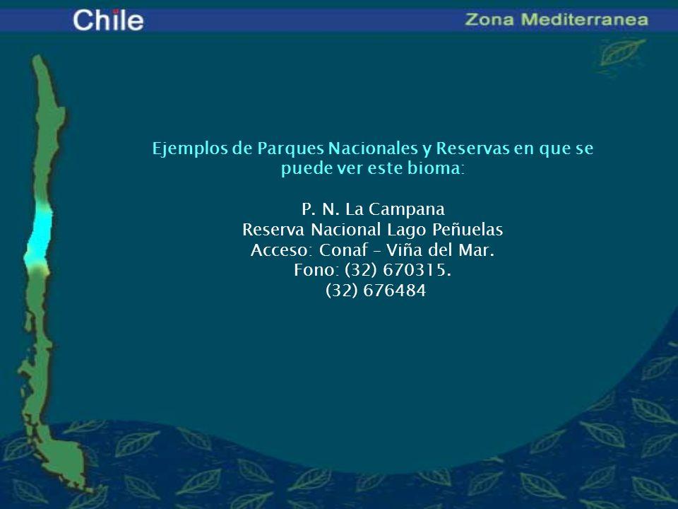 Reserva Nacional Lago Peñuelas Acceso: Conaf – Viña del Mar.